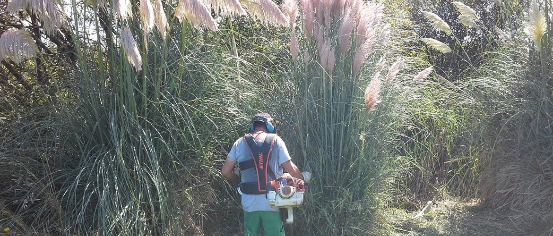 LIFE Stop Cortaderia: implementa la primera fase del plan de acción de lucha contra el plumero vigente en Cantabria con el apoyo del Ministerio para la Transición Ecológica y el Reto Demográfico, a través de la Fundación Biodiversidad